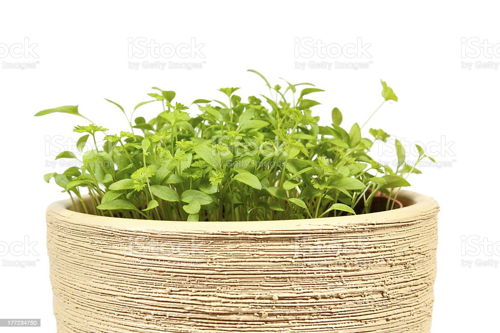 Spring vegetable in ceramic pot on a white royalty-free stock photo