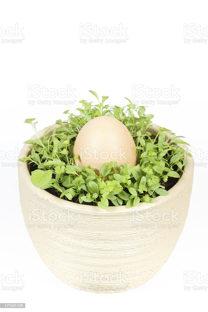 Spring vegetable with easter egg in ceramic pot royalty-free stock photo