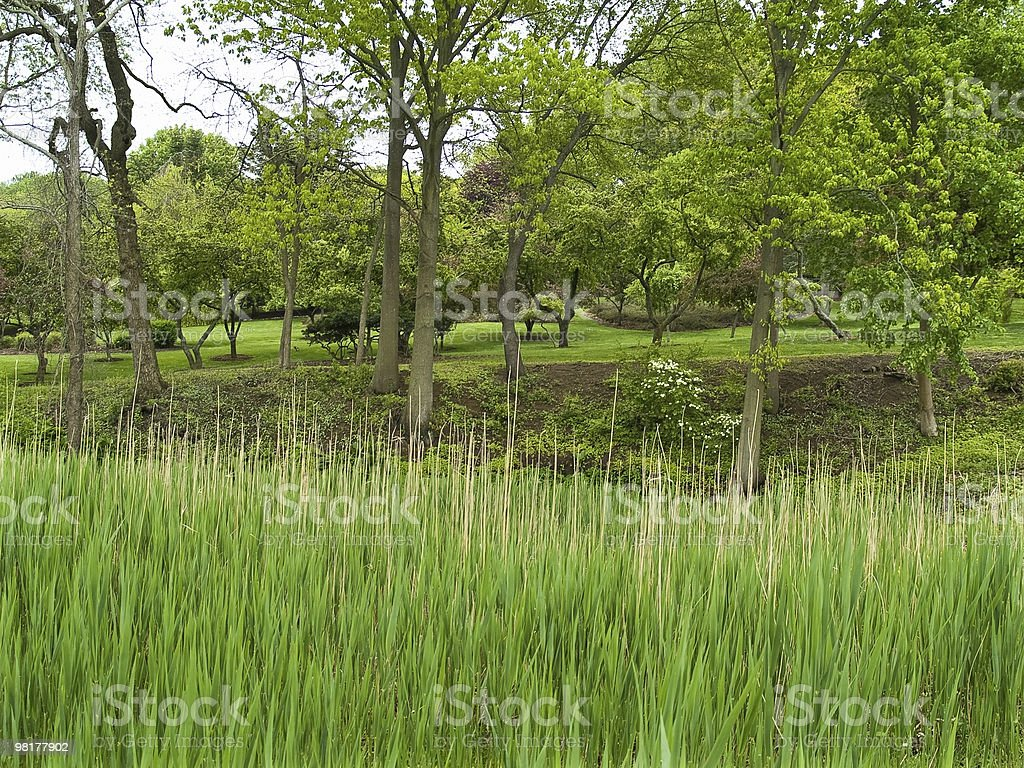 Spring View royalty-free stock photo