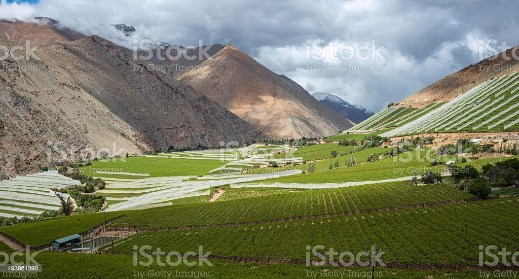 Spring Vineyard. Elqui Valley, Andes part of Atacama, Chile stock photo