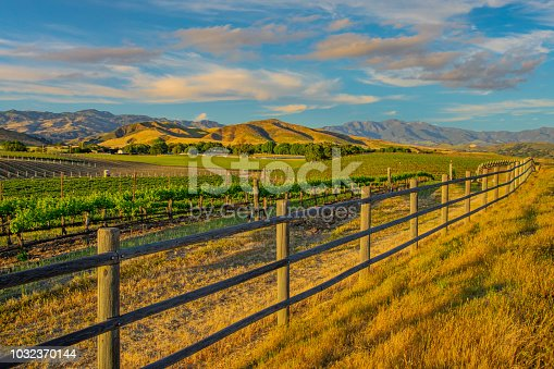 Spring crop; wine country; rolling hills; rows of crops; lush vegetation; Travel destination; rolling vineyard; agricultural field,Santa Ynez vineyard; Santa Barbara Vineyard