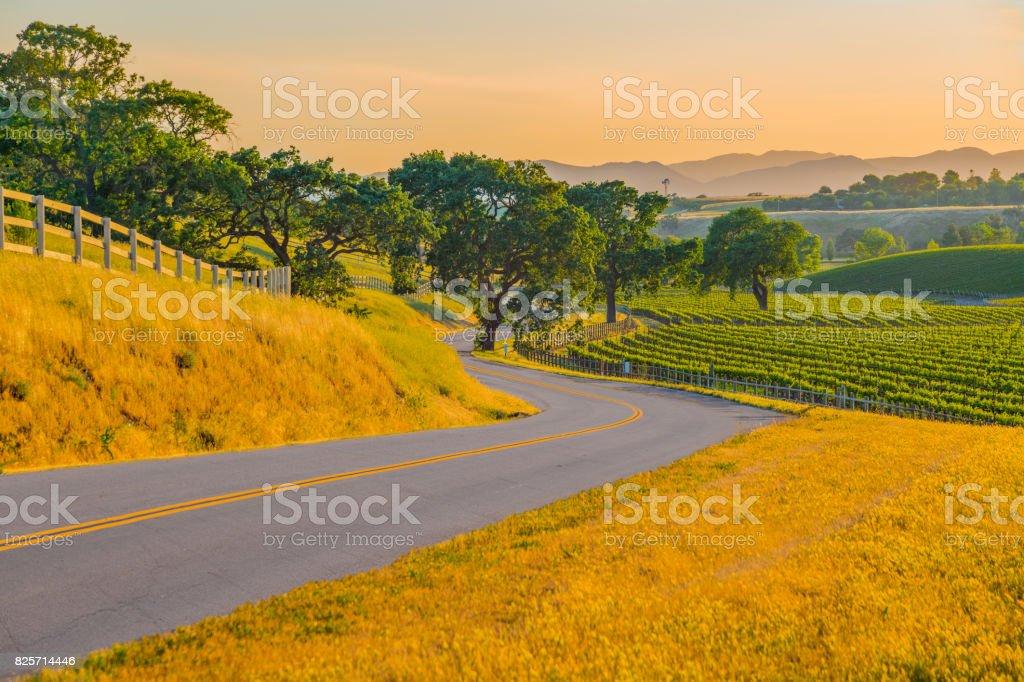 Spring vineyard in the Santa Ynez Valley Santa Barbara, CA stock photo
