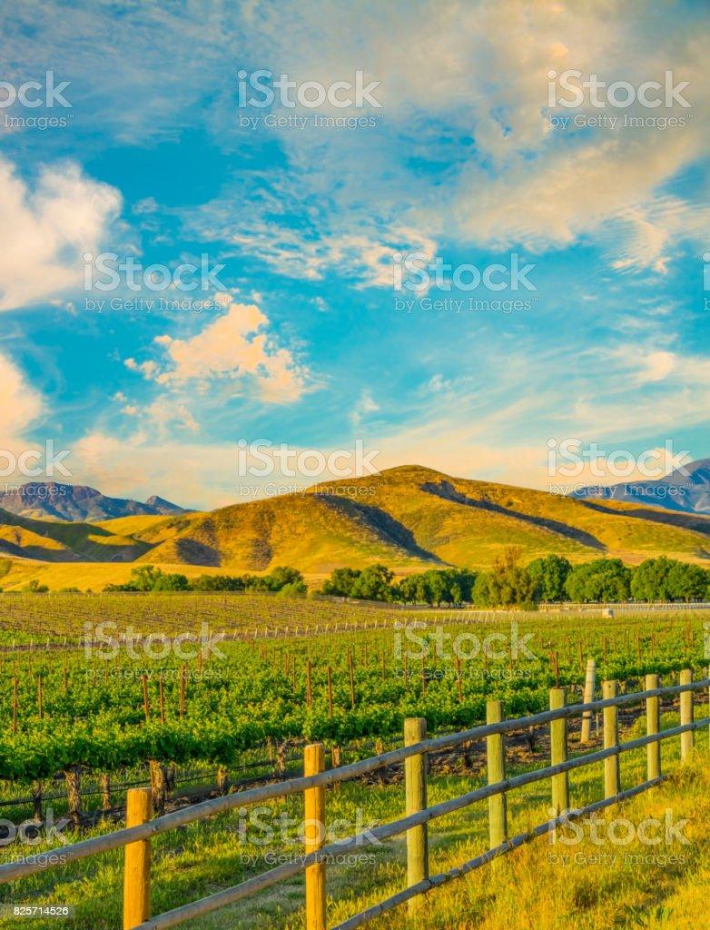 Spring vineyard in the Santa Ynez Valley Santa Barbara, CA(P) stock photo