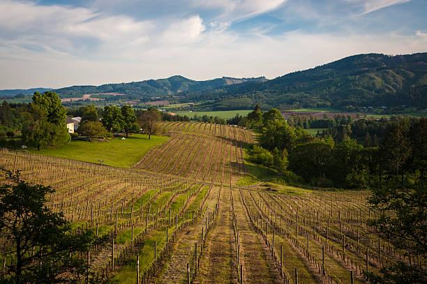 spring vineyards, dem willamette valley in oregon - robert weinberg stock-fotos und bilder