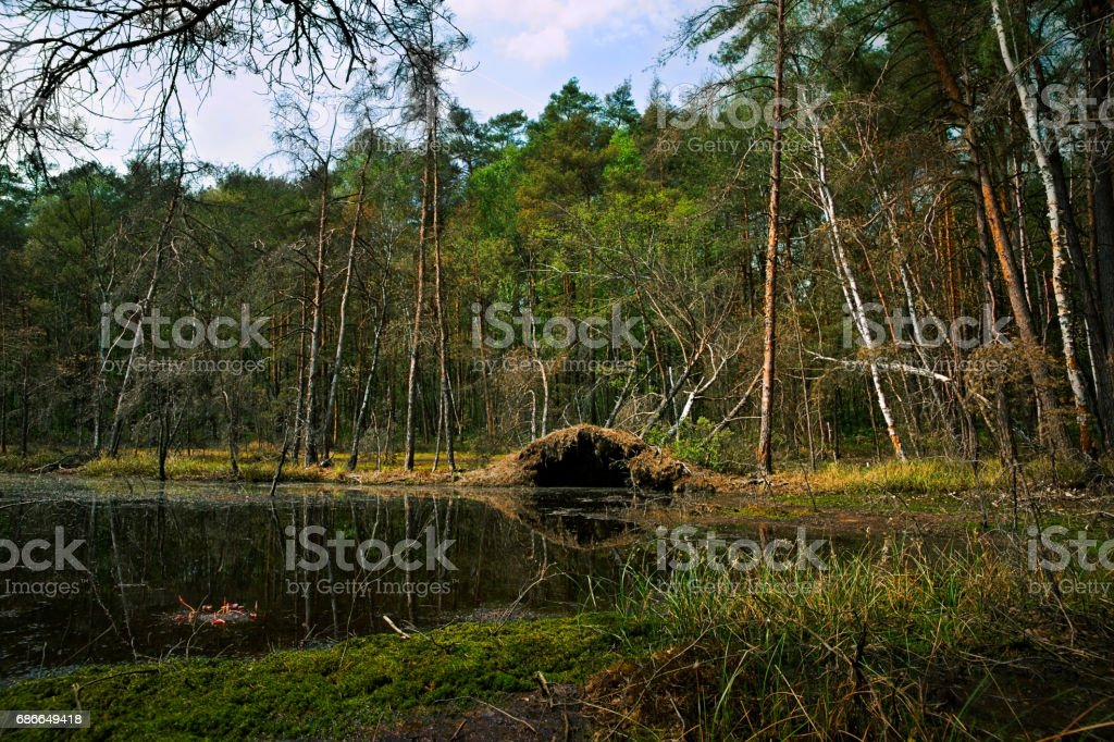 Spring, wetland, pond and forest, overturned trees, landscape Lizenzfreies stock-foto