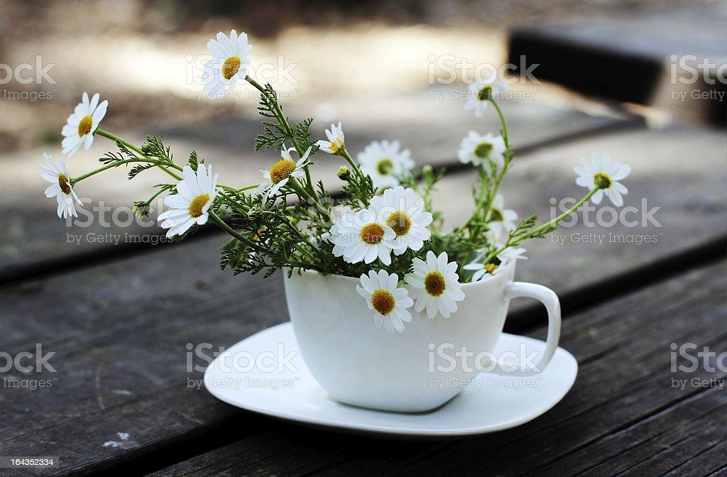 Spring white daisies royalty-free stock photo