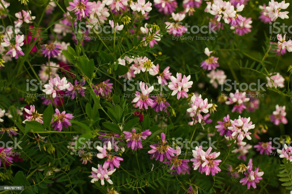 Spring wild flower background. stock photo