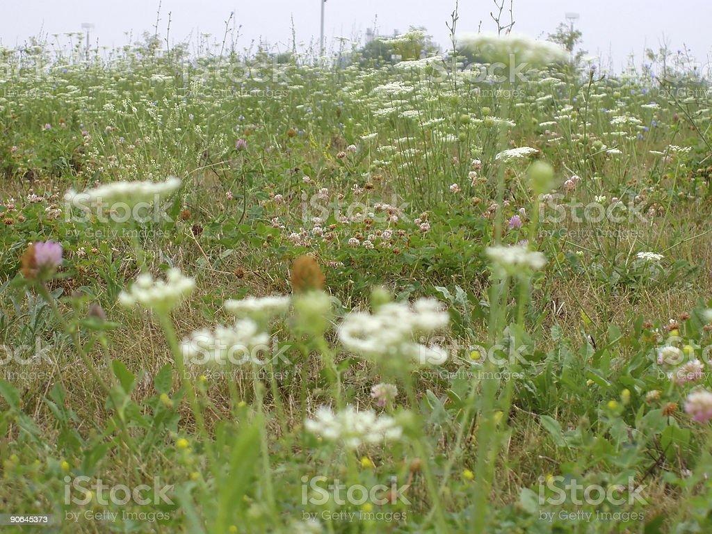 Spring Wild Flower Soft Pattern stock photo