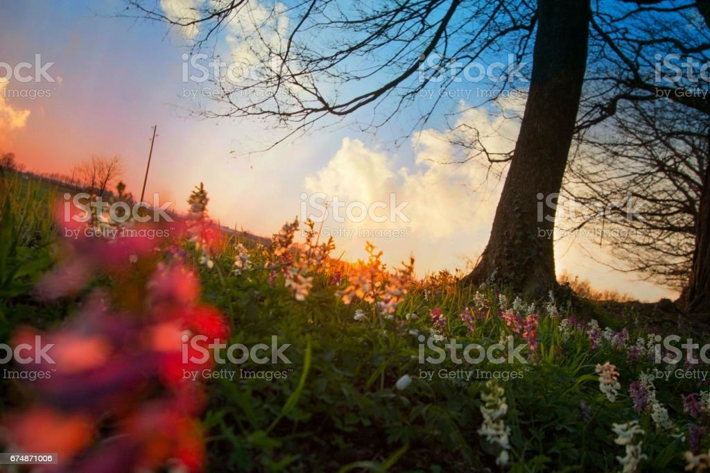 Spring wildflowers at the sunset stock photo