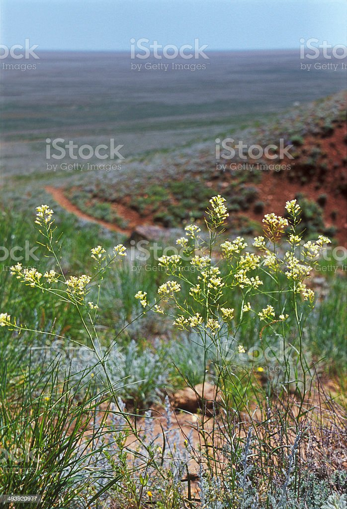 Spring. Wildflowers in the suburbs of Mount Bogo. stock photo