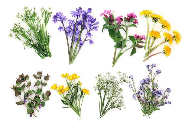 Fleurs des champs photos et images libres de droits istock - Bouquet de fleurs sauvages ...