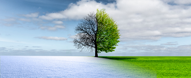 Spring winter change in a landscape with tree