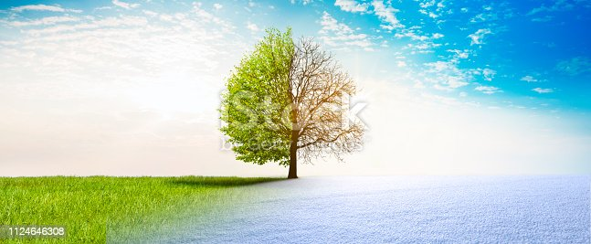 Spring winter change in Landscape with Tree
