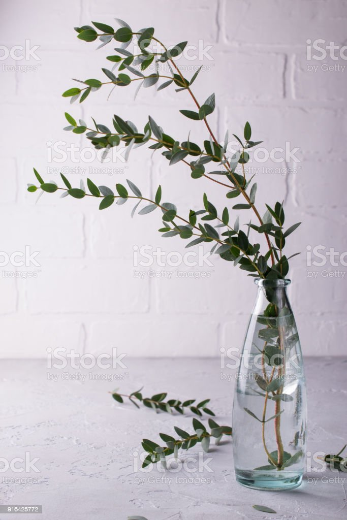 Spring With Morden Herbal Branches Of Eucalyptus In Glass Vase On