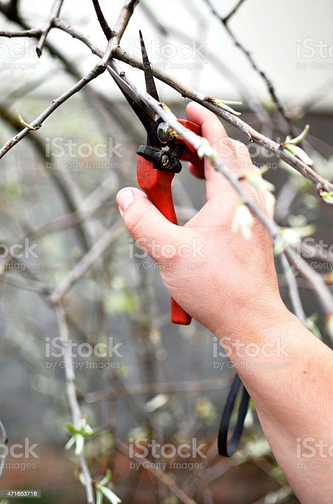 Spring work in the garden stock photo