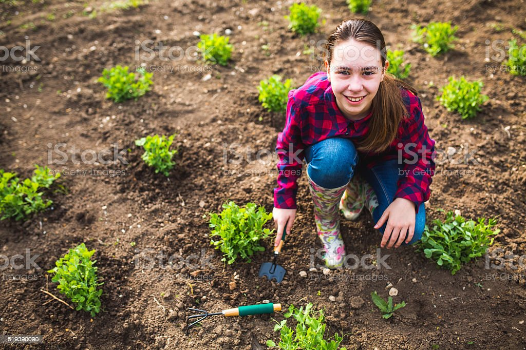 Spring works in garden stock photo