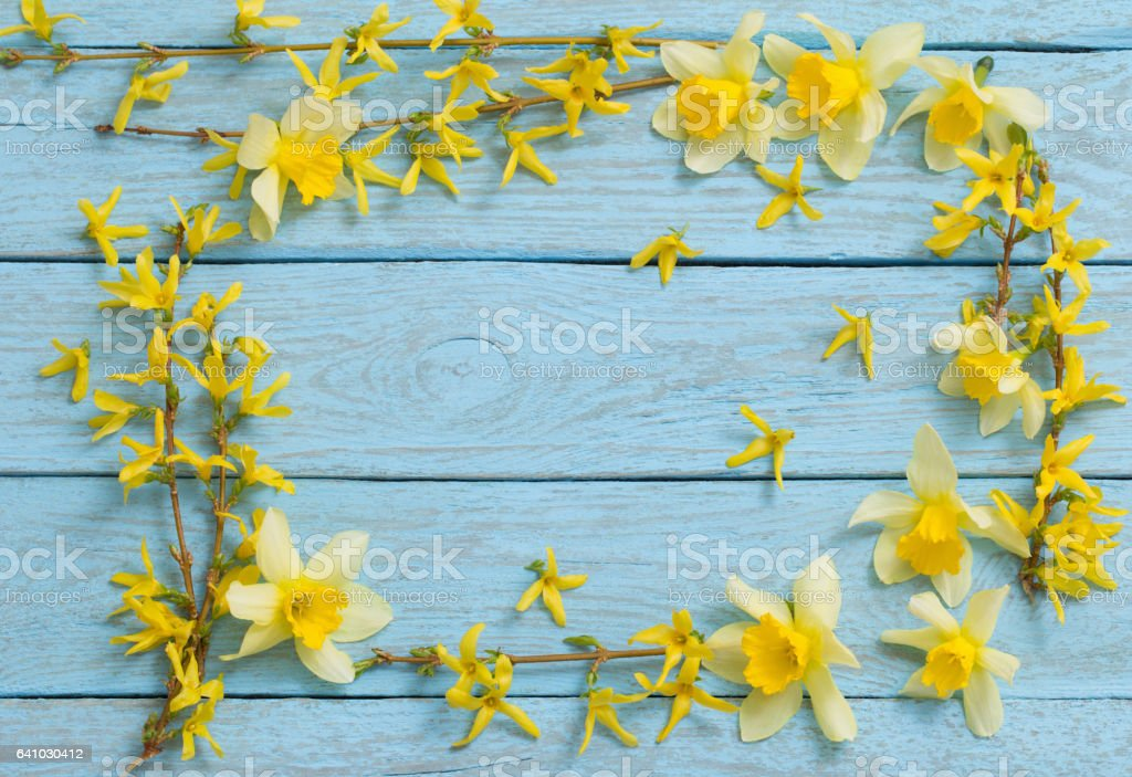 Spring yellow flowers in the old blue wooden background stock photo