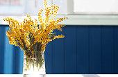 春の黄色いミモザの花。アカシア フサアカシア、フサアカシアやテーブルのクローズ アップ、ウィンドウの背景の上にガラス花瓶のミモザ。花春背景、3 月 8 日イースター。太陽光線、バックライト