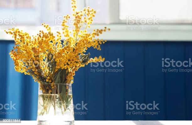 Spring yellow mimosa flowers acacia dealbata silver wattle or mimosa picture id930511844?b=1&k=6&m=930511844&s=612x612&h=brqe5itsrm6pqeaqdqwk9b0phkdhqvlv0bmyk0zjkju=