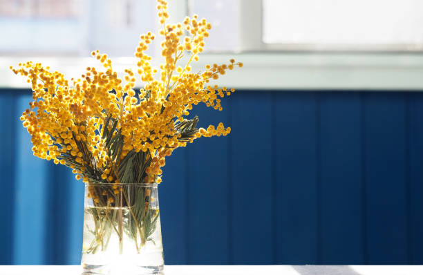 spring yellow mimosa flowers. acacia dealbata, silver wattle or mimosa in glass vase on table close-up, against background of the window. flower spring background, 8 march, easter. sun rays, backlight - vase stock pictures, royalty-free photos & images