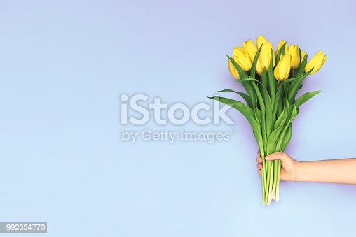 Spring yellow tulips. Woman holding a bouquet on purple background. Flat lay, top view. Tulip flower background. Add your text.