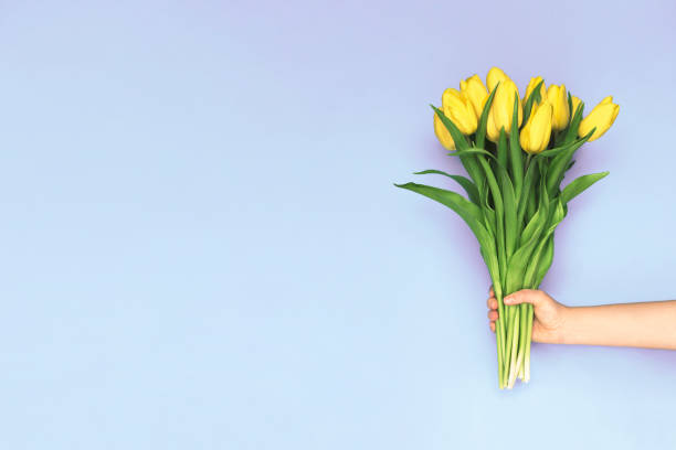 Spring yellow tulips woman holding a bouquet on purple background picture id992334770?b=1&k=6&m=992334770&s=612x612&w=0&h=php jlnzsw7g9ttdqrp3jrvvnfwatowcvibvpcxz rm=
