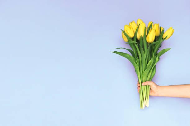 printemps des tulipes jaunes. femme tenant un bouquet sur fond violet. vue plate lapointe, haut. fond de fleur de tulipe. ajouter votre texte. - bouquet de fleurs photos et images de collection