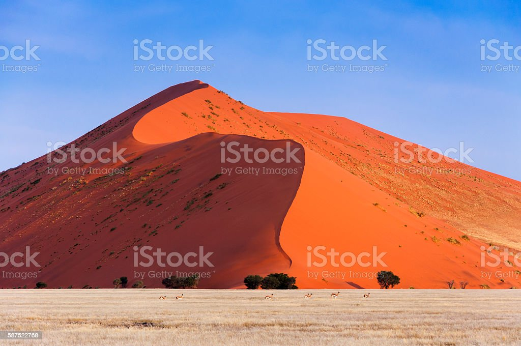 Springbok passing in front of a red dune in Sossusvlei – Foto