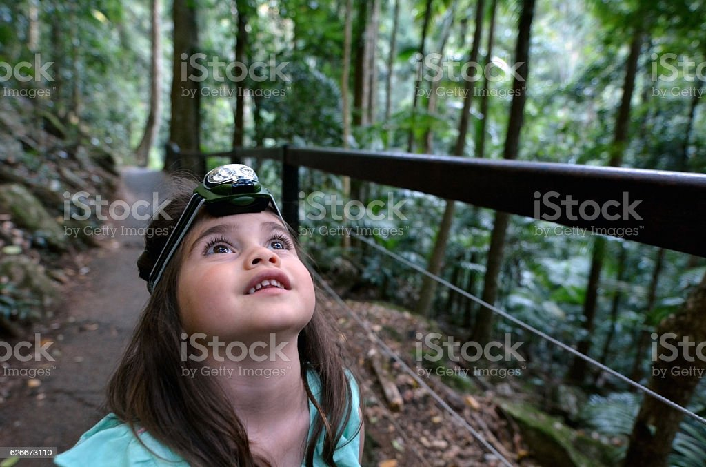 Springbrook National Park - Queensland Australia stock photo