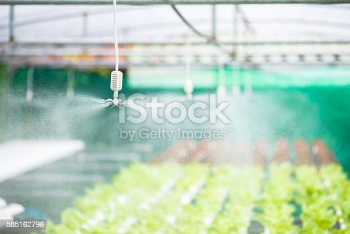 Springer spraying for watering vegetables hydroponic farm