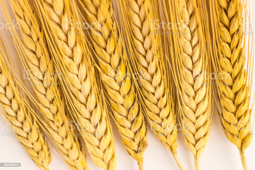 Springs of wheat on a white background. Close up. Top view zbiór zdjęć royalty-free