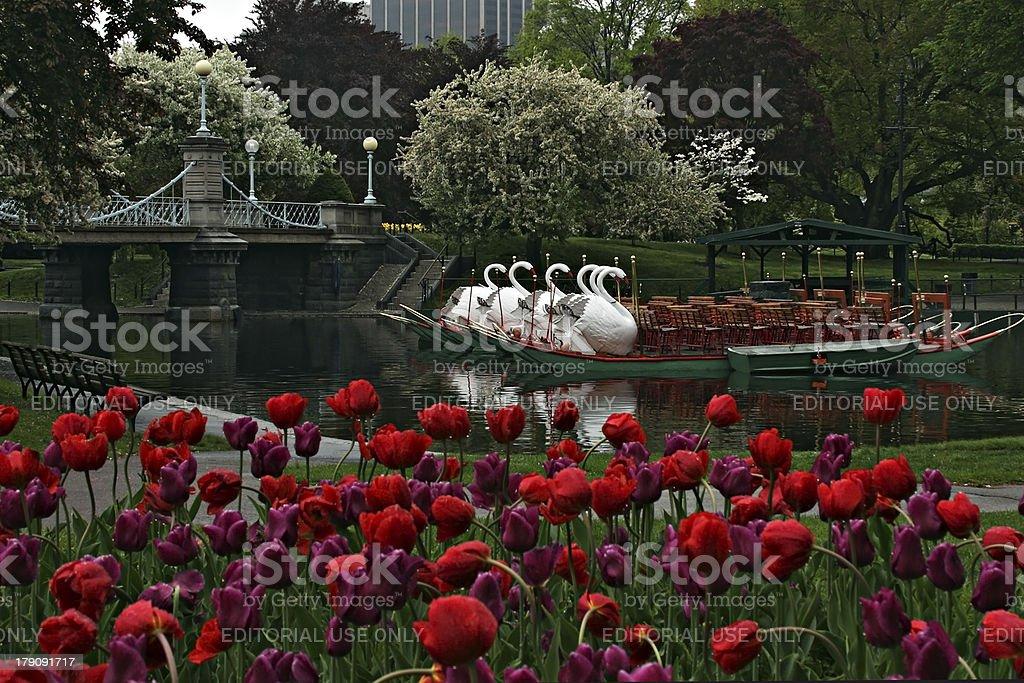 Spring's Swan Boats in Boston's Public Garden stock photo