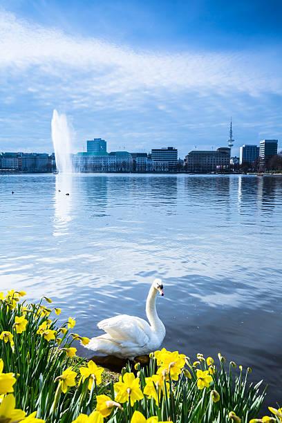 Springtime at lake Alster – Foto
