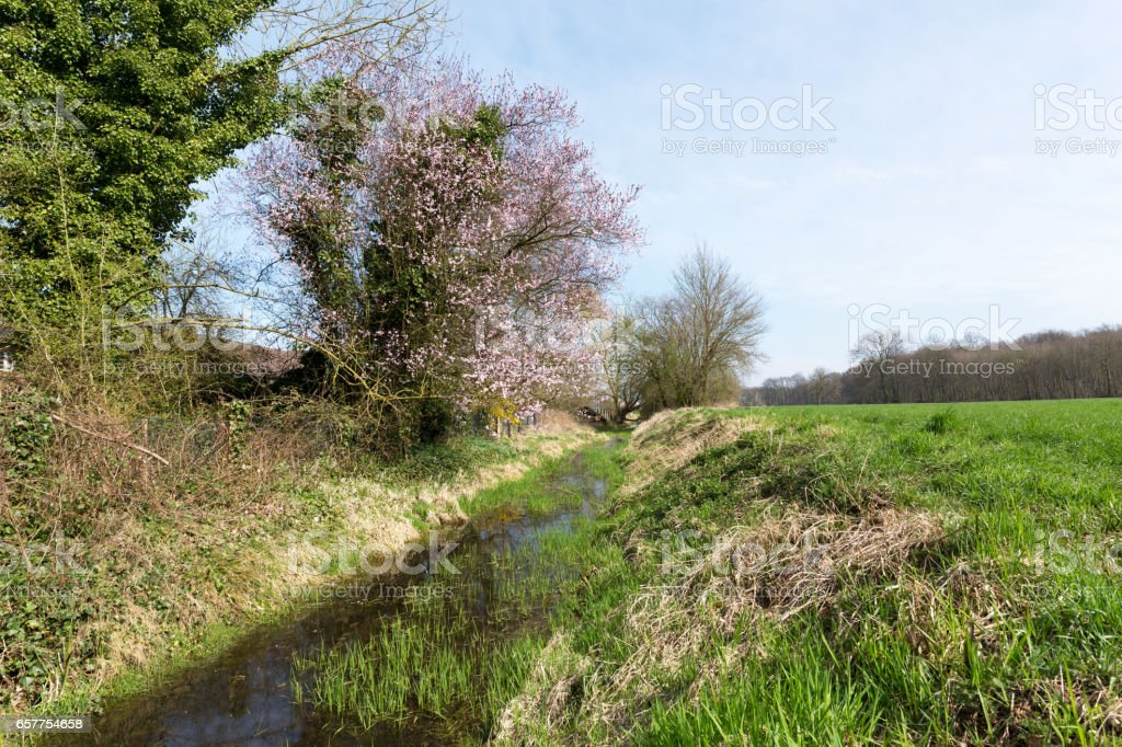 Springtime at Nature Reserve / Germany stock photo