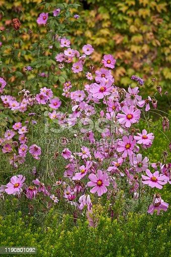 Springtime background. Muti-colored flowers in a formal garden. La Alhambra, Granada, Spain