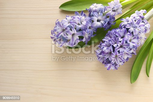 bright springtime background with two blue hyacinths lying on a wooden table