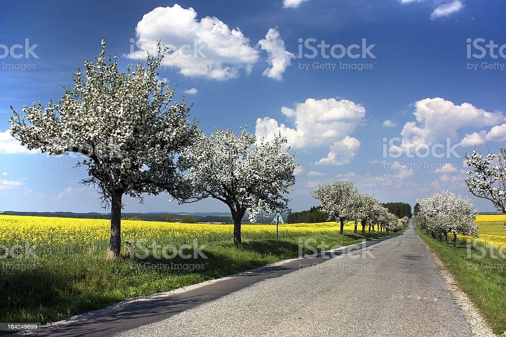 springtime beautiful view of road royalty-free stock photo