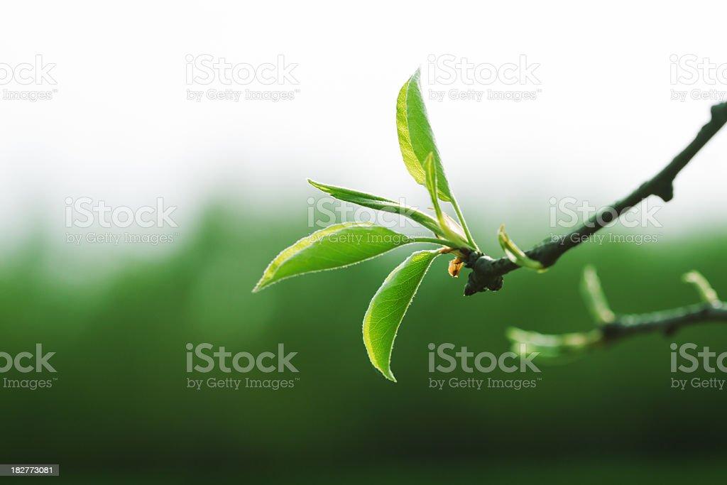 springtime beginnings royalty-free stock photo
