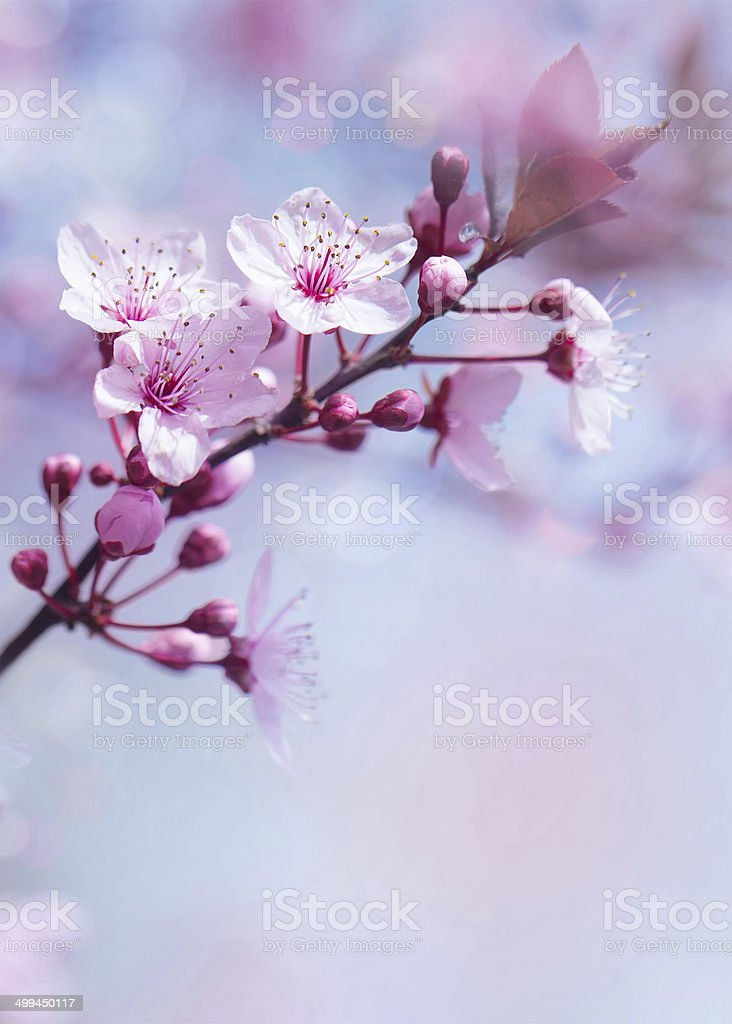Springtime blooming tree background stock photo