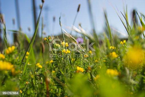 istock Springtime blurred nature background 994262664