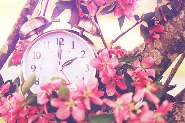 frühling sommerzeit - blumenuhr stock-fotos und bilder