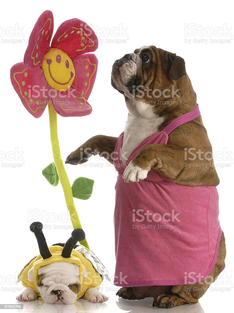 springtime dogs royalty-free stock photo