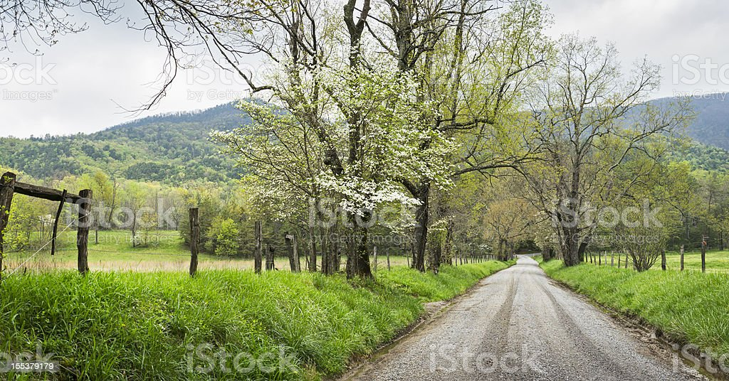 Springtime dogwood trees panoramic in the Smoky Mountains royalty-free stock photo
