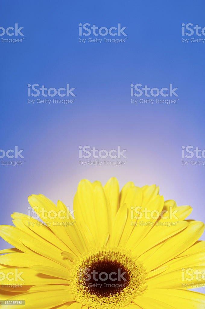 springtime flower royalty-free stock photo