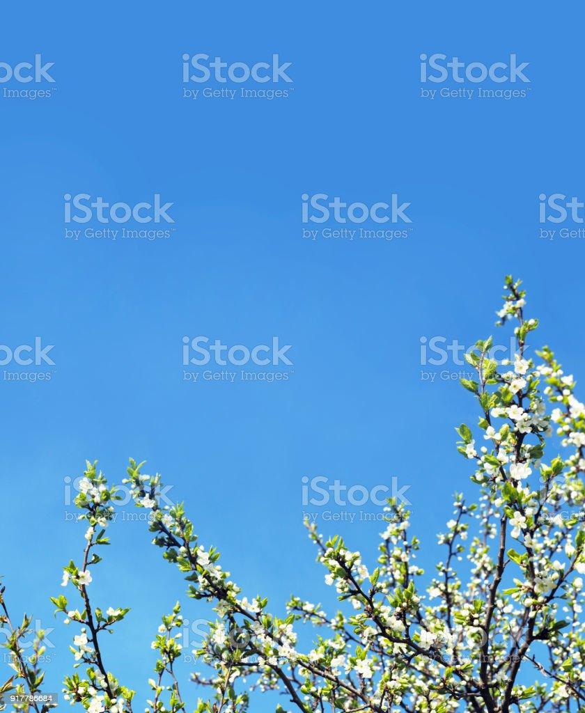 Springtime flowering orchard beautiful nature scene with blooming flowering orchard beautiful nature scene with blooming trees easter sunny day izmirmasajfo