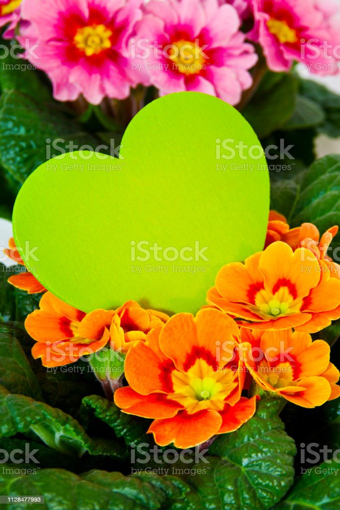 Primroses and heart home decoration against a wooden background