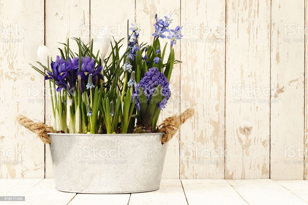 springtime, flowers composition in pots isolated on wooden white stock photo