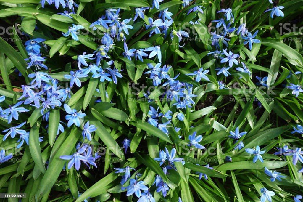 Frühlingsblumen – Foto