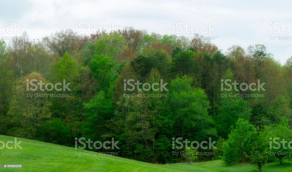 Springtime Foliage in East Tennessee stock photo