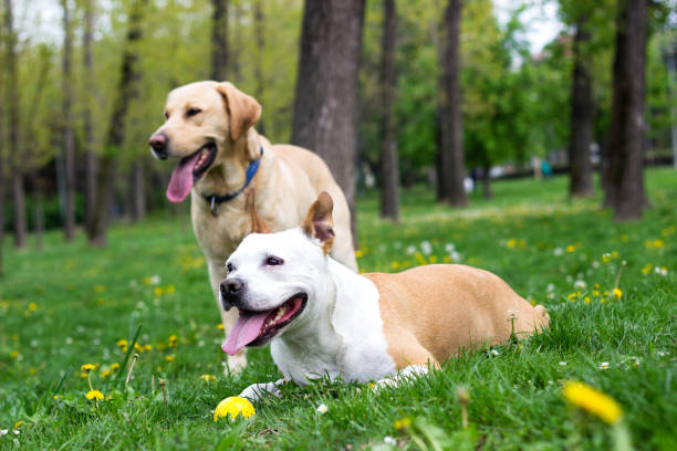Springtime happy dog friends stock photo